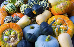 Pumpkins Gourds Marrows and Squash. Cucurbitaceae family of plants including Pumpkins Gourds Marrows and Squash royalty free stock photo