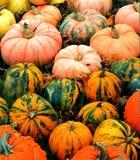 Pumpkins & Gourds, October 2014, Fryeburg, Maine - by Eric L. Johnson Stock Photo