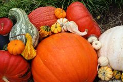 Pumpkins gourds Royalty Free Stock Photo
