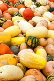Pumpkins Gourds Portrait Royalty Free Stock Photo