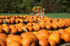 Pumpkins and gourds at the pumpkin patch. Festive holiday harvest of pumpkins and other squash products Stock Photography