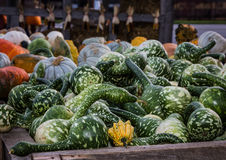 Pumpkins and gourds at roadside Stock Images