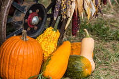 Pumpkins and gourds at roadside Royalty Free Stock Image