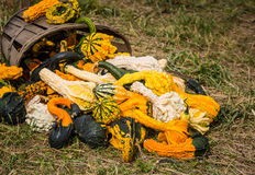 Pumpkins and gourds at roadside Royalty Free Stock Photos
