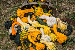Pumpkins and gourds at roadside Royalty Free Stock Photography