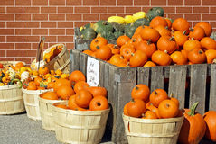 Pumpkins And Gourds For Sale at an outdoor Farmer's Market Royalty Free Stock Photography