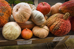 Pumpkins, gourds and squash. On a farm stand in autumn Stock Photo