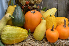 Pumpkins, Gourds and Squash Stock Photos