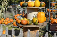 Pumpkins, gourds and squash Royalty Free Stock Images