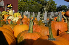 Pumpkins, gourds and squash Stock Photography