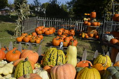 Pumpkins, gourds and squash Stock Images