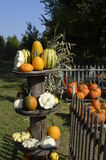 Pumpkins, gourds and squash Royalty Free Stock Photo