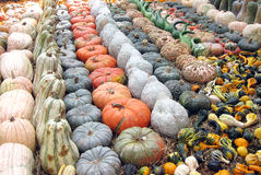 Pumpkins, Gourds and Squashes Stock Photography