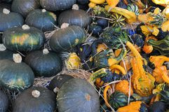 Pumpkins, gourds, and squashes Royalty Free Stock Photography