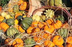 Pumpkins, gourds, and squashes Stock Images
