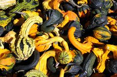 Pumpkins, gourds, and squashes Royalty Free Stock Image