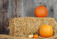 Pumpkins and gourds on straw Stock Photo
