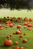 Pumpkins on the grass Royalty Free Stock Photos