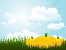 Pumpkins in grass Stock Photos