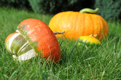 Pumpkins in Grass Royalty Free Stock Photography