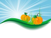 Pumpkins in grass Stock Image