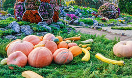 Pumpkins on grass Stock Image