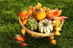 Pumpkins  in the grass Stock Images