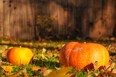 Pumpkins on grass Royalty Free Stock Photography