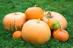 Pumpkins on the grass Stock Photos