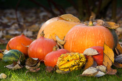 Pumpkins on the grass with leaves Stock Photos