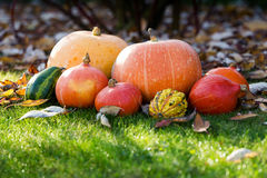 Pumpkins on the grass with leaves Stock Photo