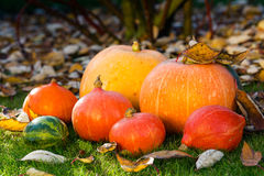 Pumpkins on the grass with leaves Royalty Free Stock Photography