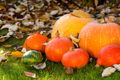 Pumpkins on the grass with leaves Stock Photography