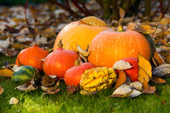 Pumpkins on the grass with leaves Royalty Free Stock Photos