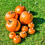 Pumpkins on Grass Royalty Free Stock Photos