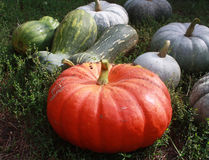 Pumpkins on the grass. Many different pumpkins on the grass Royalty Free Stock Photography