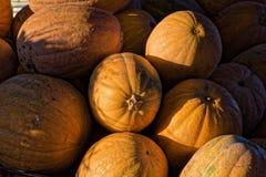 Pumpkins in Greece Stock Photo