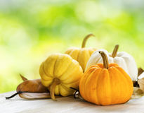 Pumpkins on green natural background Royalty Free Stock Photo
