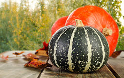 Pumpkins on green natural background Stock Images