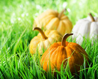 Pumpkins on green natural grass Stock Photos