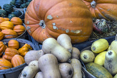 Pumpkins, grouds and Squash Royalty Free Stock Photography