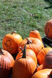 Pumpkins on the ground. Pumpkins in the sun against a grassy background Stock Photography
