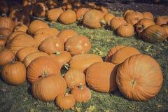 Pumpkins Royalty Free Stock Photos