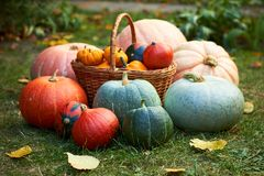 Pumpkins group composition, autumn harvest or festive - thanksgiving or halloween - concept. Composition with variety of pumpkins, harvest in the autumn garden stock photos