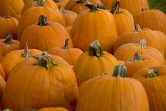Pumpkins in a group Stock Images