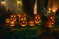 Pumpkins in the Grove. A grove of pumpkins inviting people in for halloween Royalty Free Stock Photography