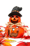 Pumpkins halloveen collection Royalty Free Stock Photo
