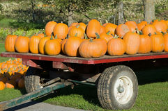 Pumpkins for Halloween Royalty Free Stock Photo