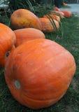 Pumpkins for Halloween. Heap of pumpkins ready for Halloween Stock Image