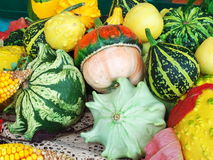 Pumpkins for Halloween. Different colored pumpkins ready for Halloween feast Royalty Free Stock Images